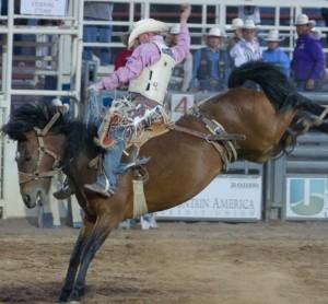 Saddle Bronc Riding Dinosaur Roundup Rodeo