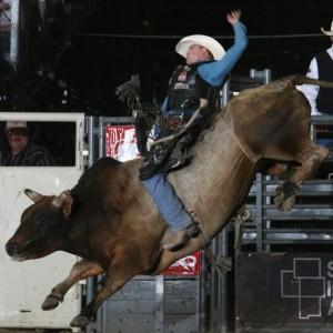 Bull Riding Dinosaur Roundup Rodeo