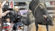 Bull riders who might not weight more than 150 pounds, place a flat braided rope around a bull that weighs almost 2,000 pounds. The bull rope is placed around the...